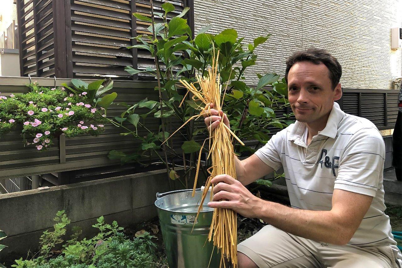 Автор статьи в саду чистит рисовую солому