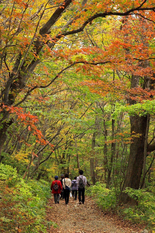 Парковая зона «Насу Хэйсэй-но мори» в естественном буковом лесу открылась в 2011 году (фотография Ассоциации туризма и продукции префектуры Тотиги)