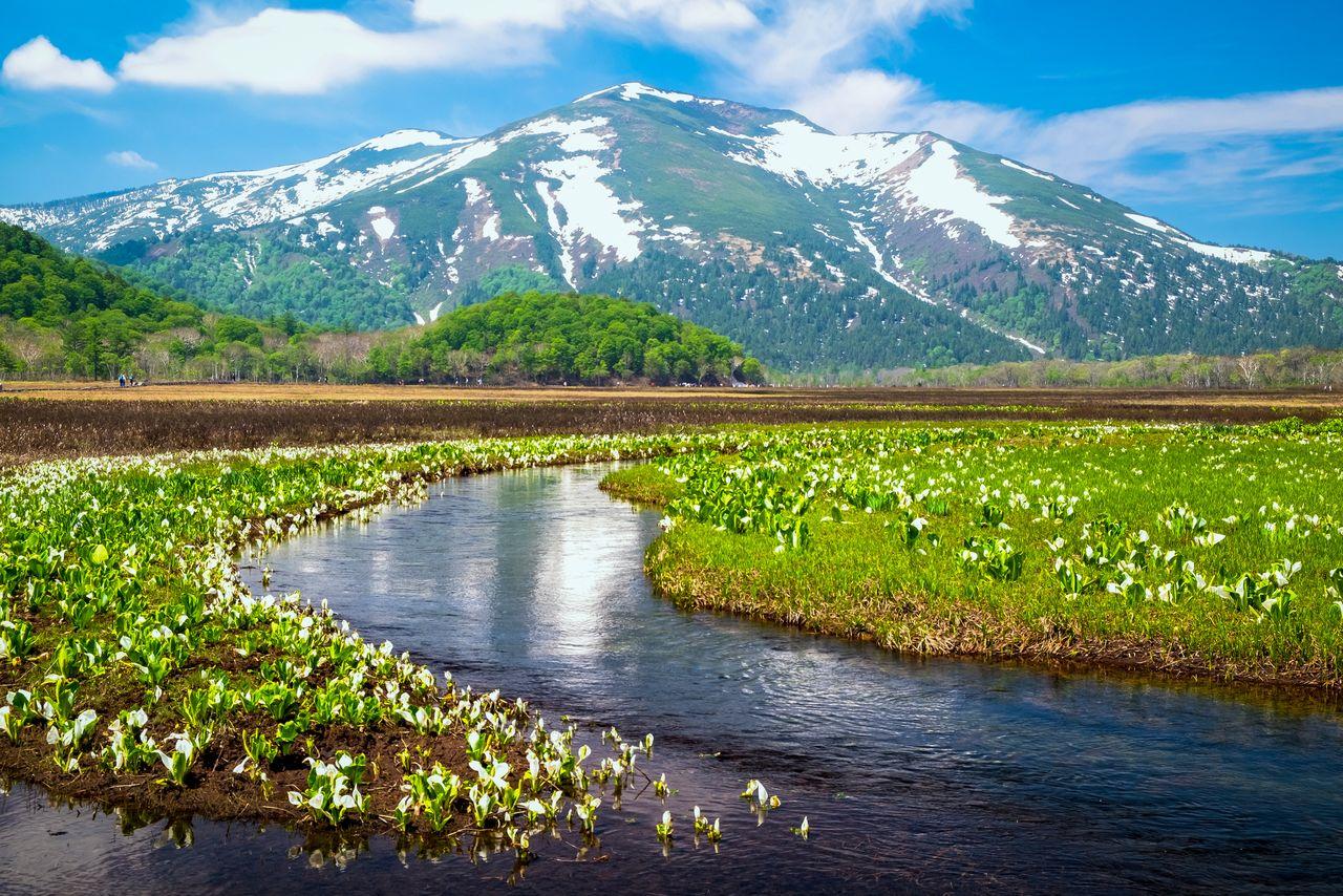 Гора Сибуцусан над болотами с цветами мидзубасё, на горе ещё остался снег (фотография PIXTA)