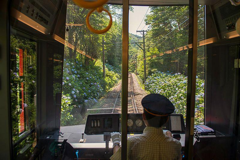 Поезд идёт по коридору из гортензий
