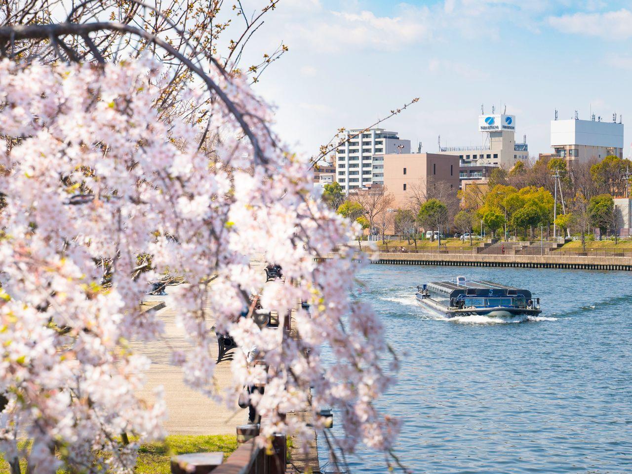 Вишнёвые деревья по берегам реки изумительно красивы весной