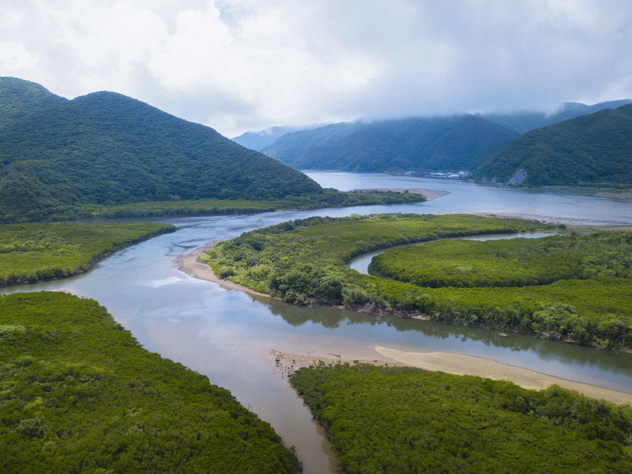 Реки змеятся сквозь нетронутые мангровые чащи