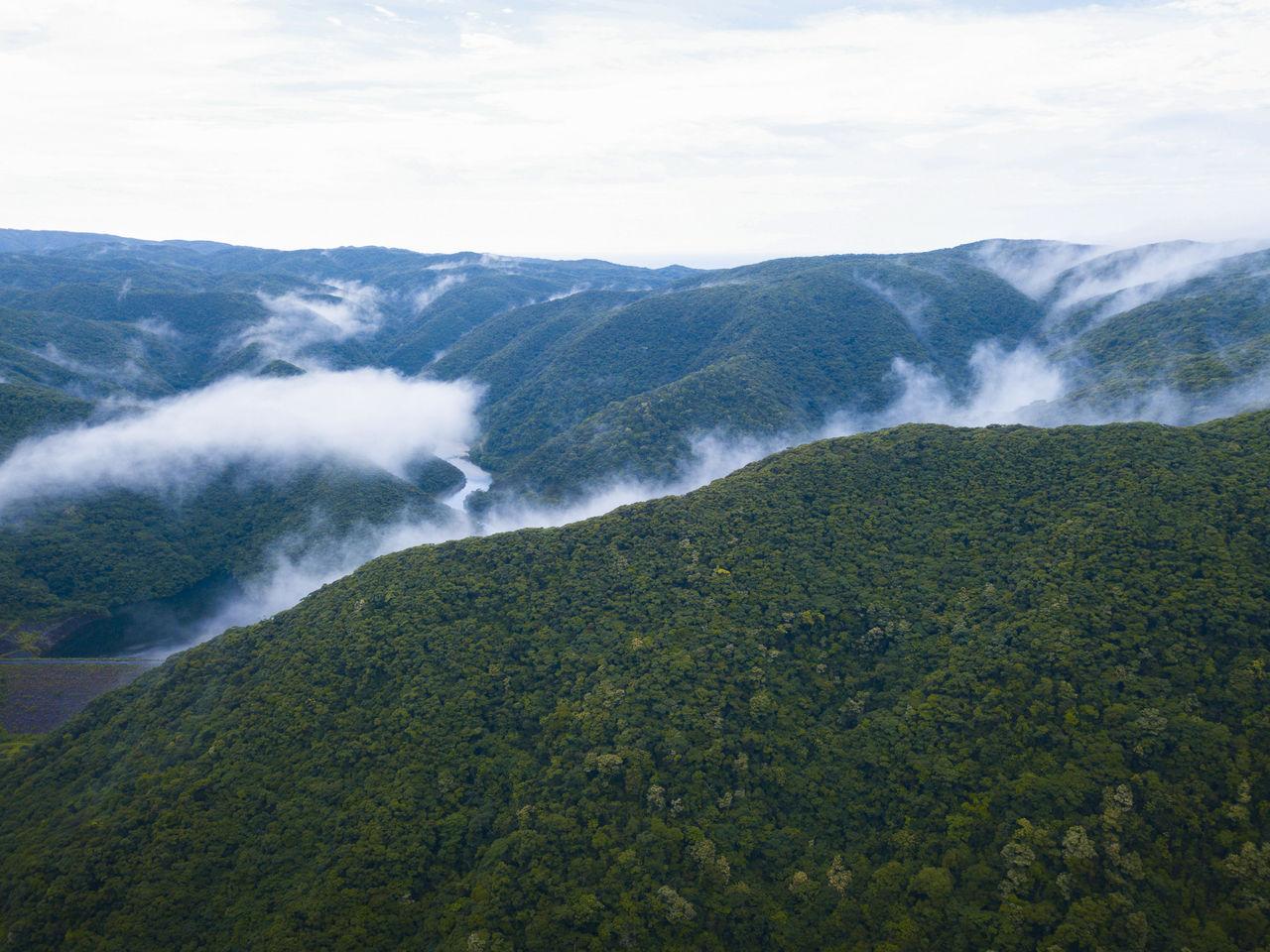 Аэроснимок грандиозных просторов первобытного леса Кинсакубару