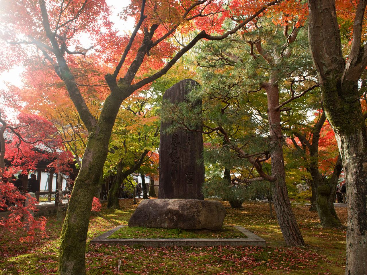 Деревья вокруг стелы, на которой написано стихотворение, приписываемое знаменитому монаху Нёку: «Приезжая в Цутен, я вижу блеск луны и замираю»