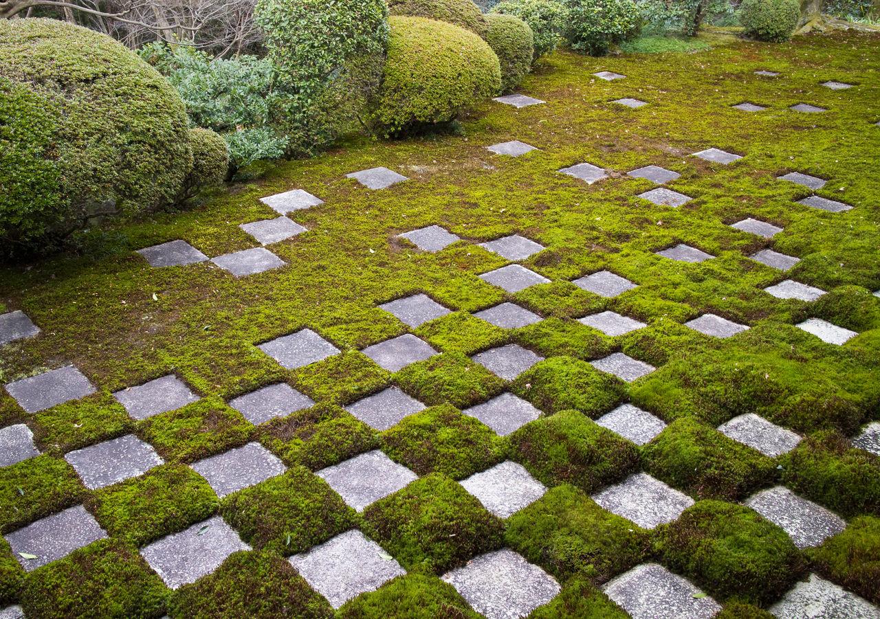 В северных садах Хомбо мох и каменные плиты образуют шахматный узор
