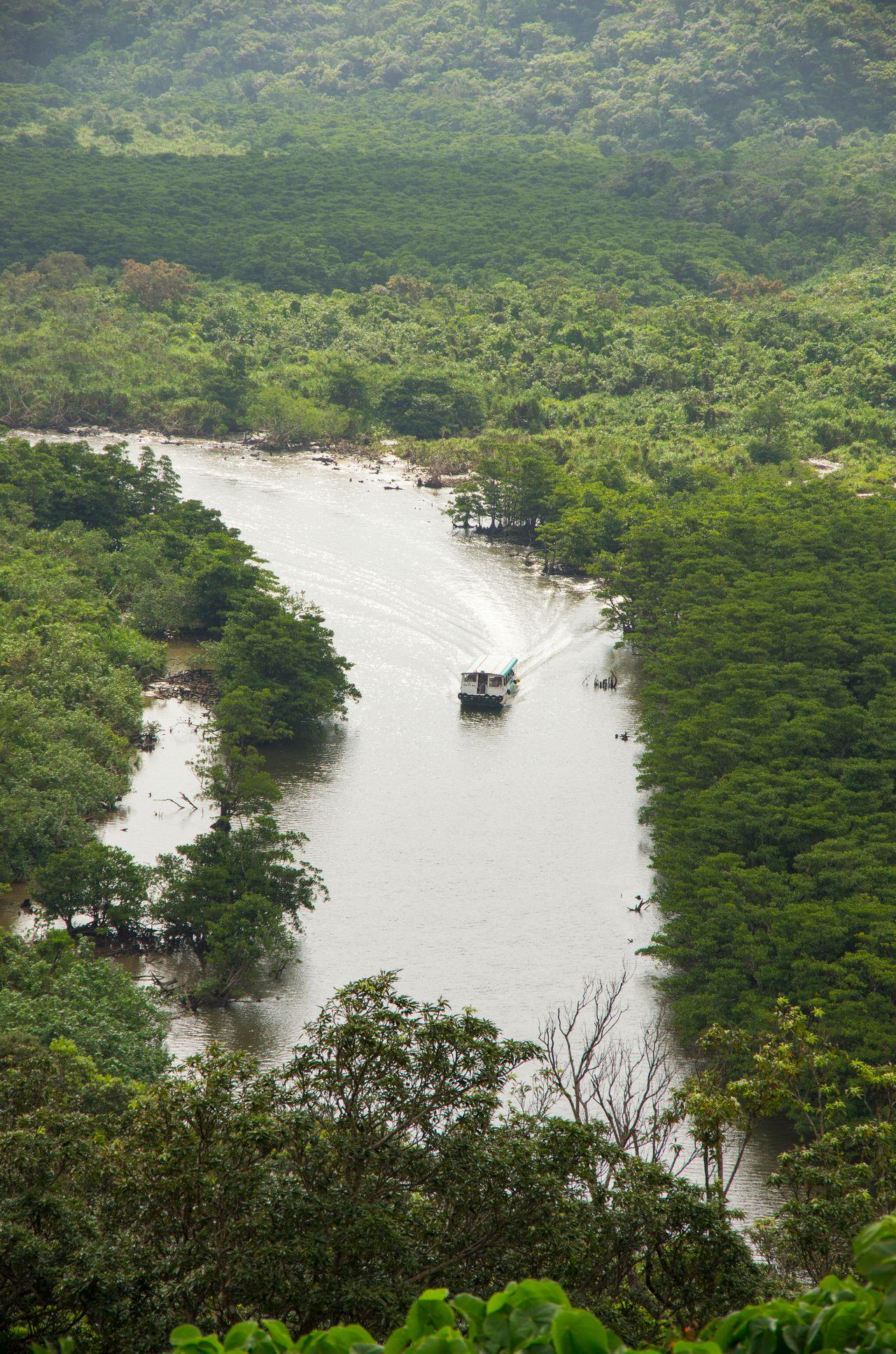Круиз по реке Накама рядом с мангровым лесом (предоставлено OCVB)