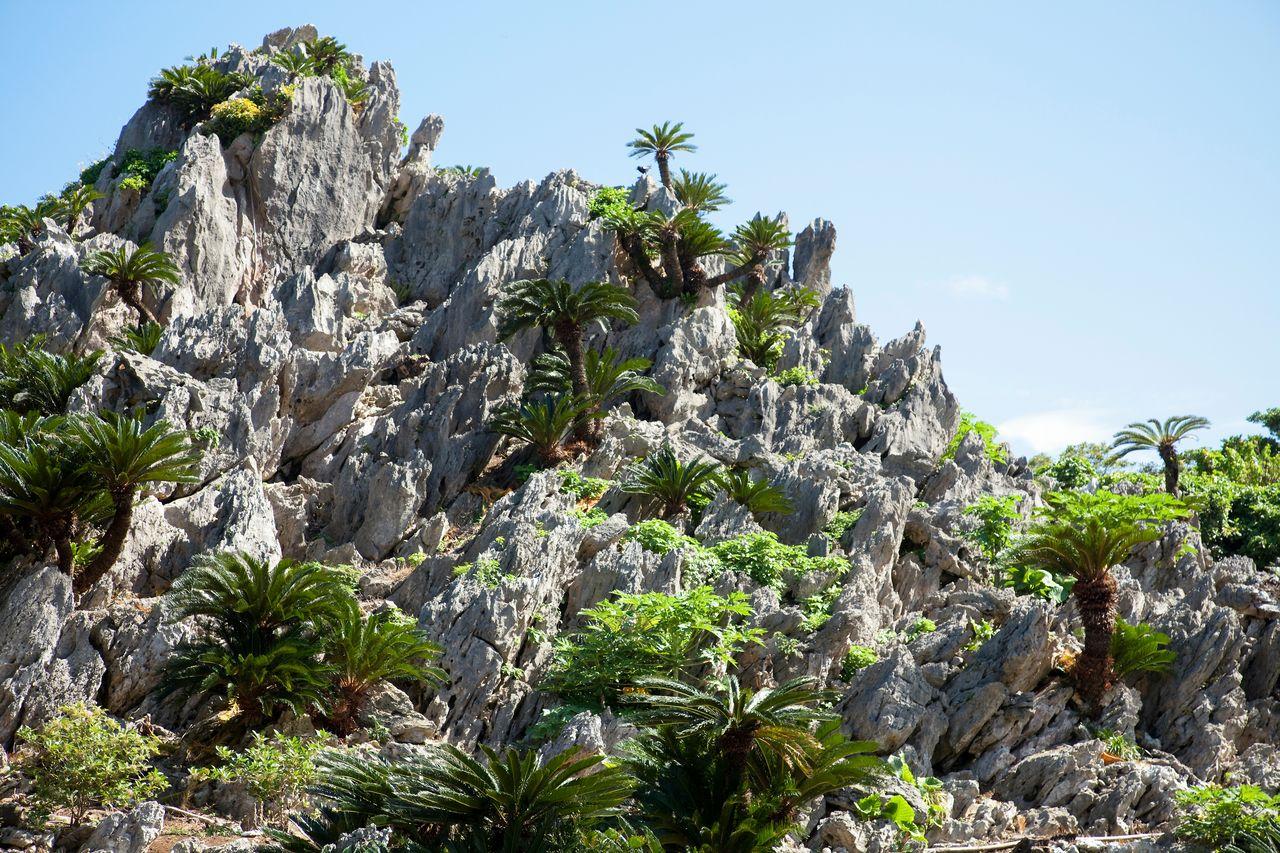 Пешеходный маршрут для новичков проходит через лес горы Дайсэкирин, где можно видеть причудливые скальные образования и гигантские камни (предоставлено OCVB)