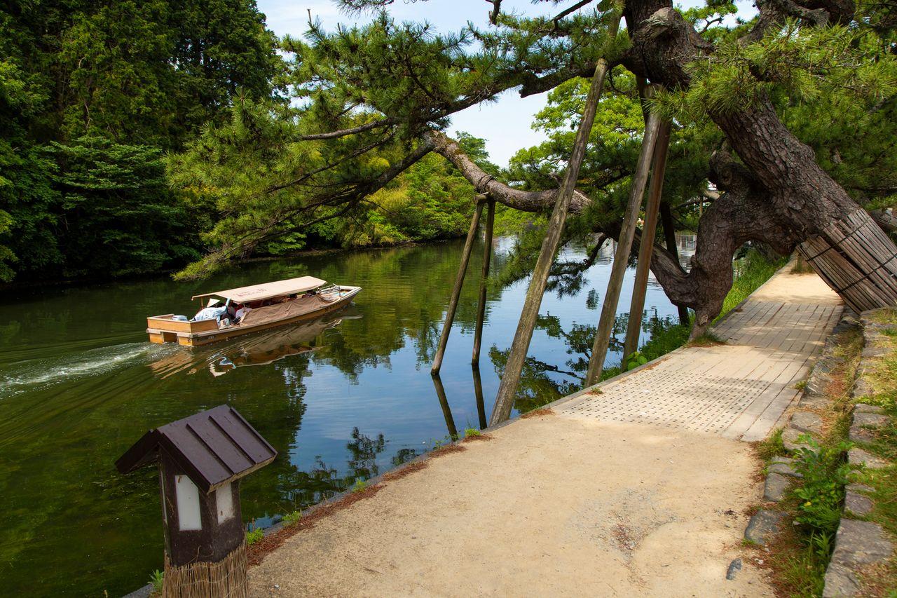 Экскурсионный катер проходит мимо кугури-мацу, сосны необычной формы, которая, по поверьям, помогает найти спутника жизни