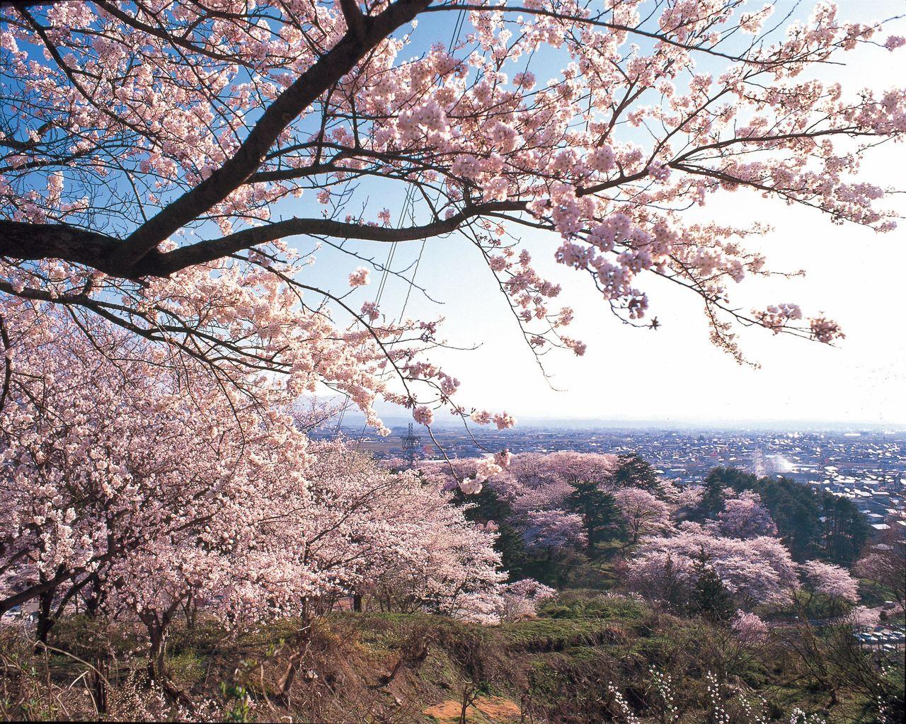 Деревья парка Эбосияма над курортом с горячими источниками (фотография предоставлена Обществом продукции префектуры Ямагата)