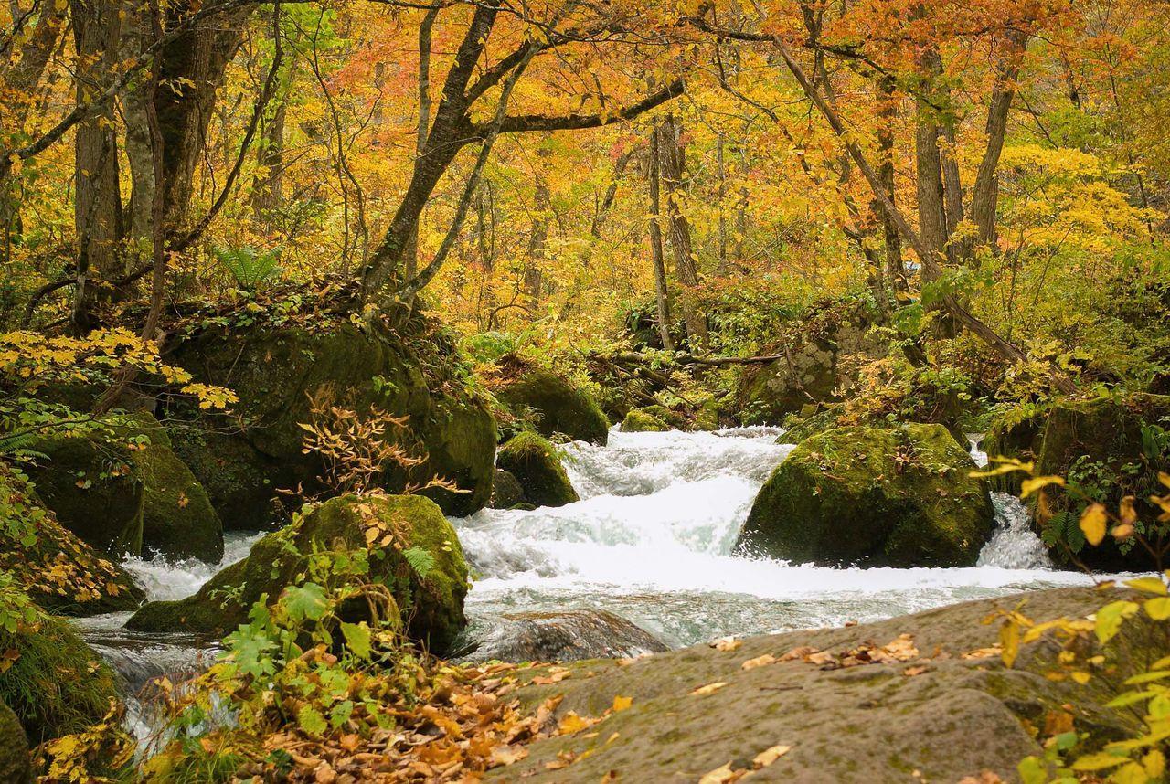 Горная река Оирасэ, вытекающая из озера Товада. Место особенно популярно в сезон осенней листвы (фотография предоставлена Федерацией туризма префектуры Аомори)