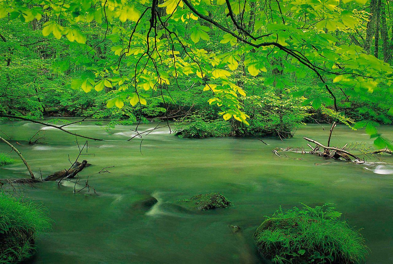 Ущелье Оирасэ в прохладный сезон новой листвы (фотография предоставлена Федерацией туризма префектуры Аомори)