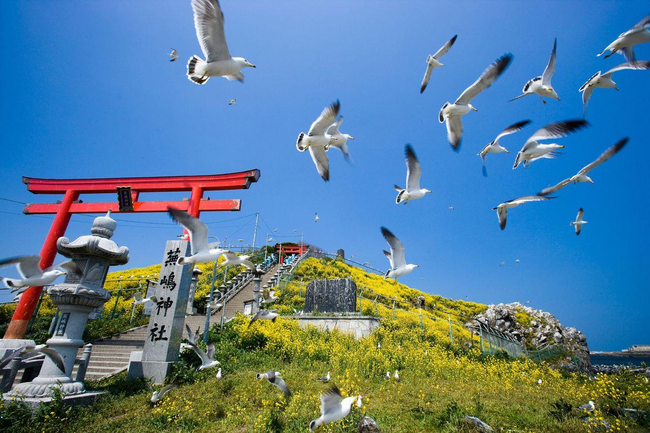 Святилище Кабусима, где летают чернохвостые чайки, является популярным «местом силы» (фотография предоставлена Федерацией туризма префектуры Аомори)