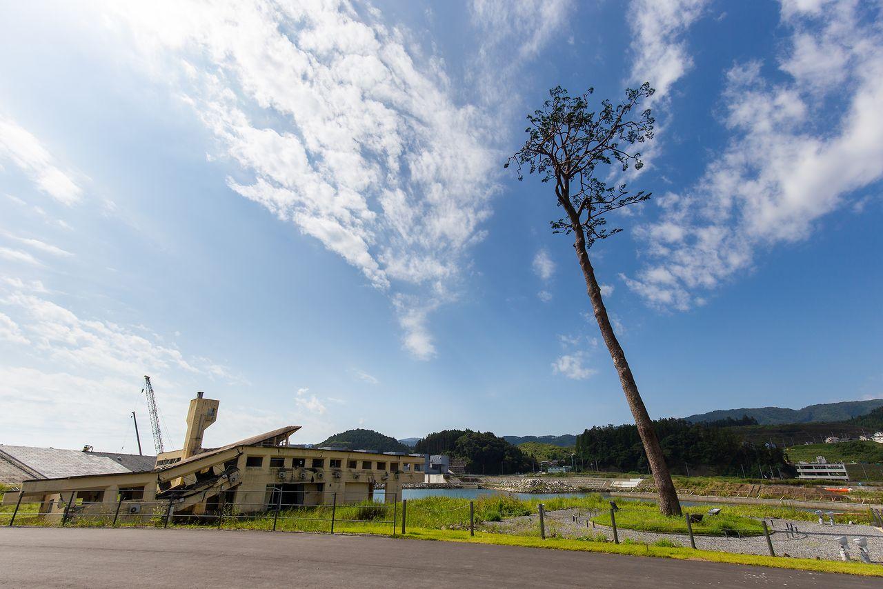 «Чудесная сосна» и остатки молодёжного хостела Рикудзэнтаката, пострадавшего от цунами (фотография Nippon.com)