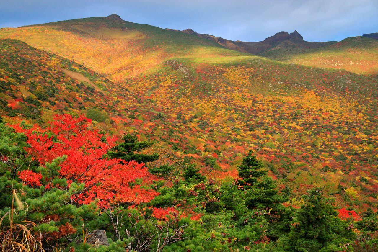 Гора Адатара окрашена в осенние цвета. На вершину можно подняться по канатной дороге (фотография: PIXTA)