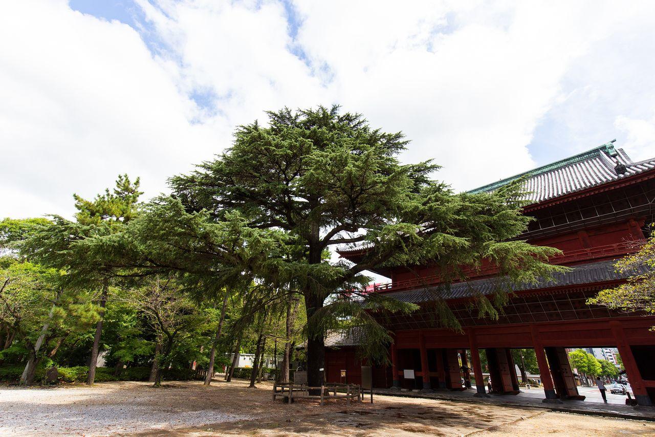 У ворот храма стоит сосна, посаженная президентом США Улиссом С. Грантом, который посетил Японию со своей женой в 1879 году после окончания президентского срока