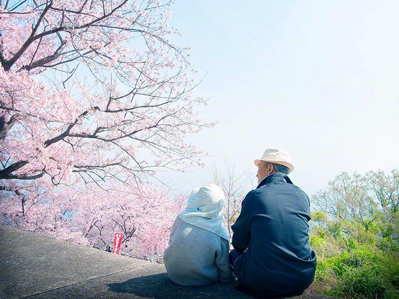 Пожилая пара наслаждается покоем под цветущими вишневыми деревьями на Ибукидзиме