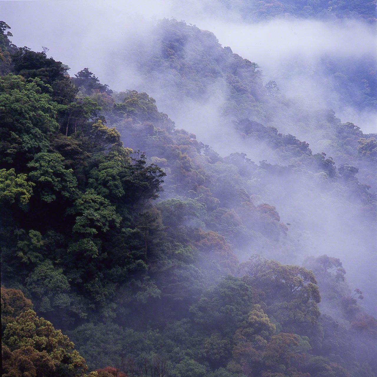 При изменении погодных условий лавровые леса иногда погружаются в туман