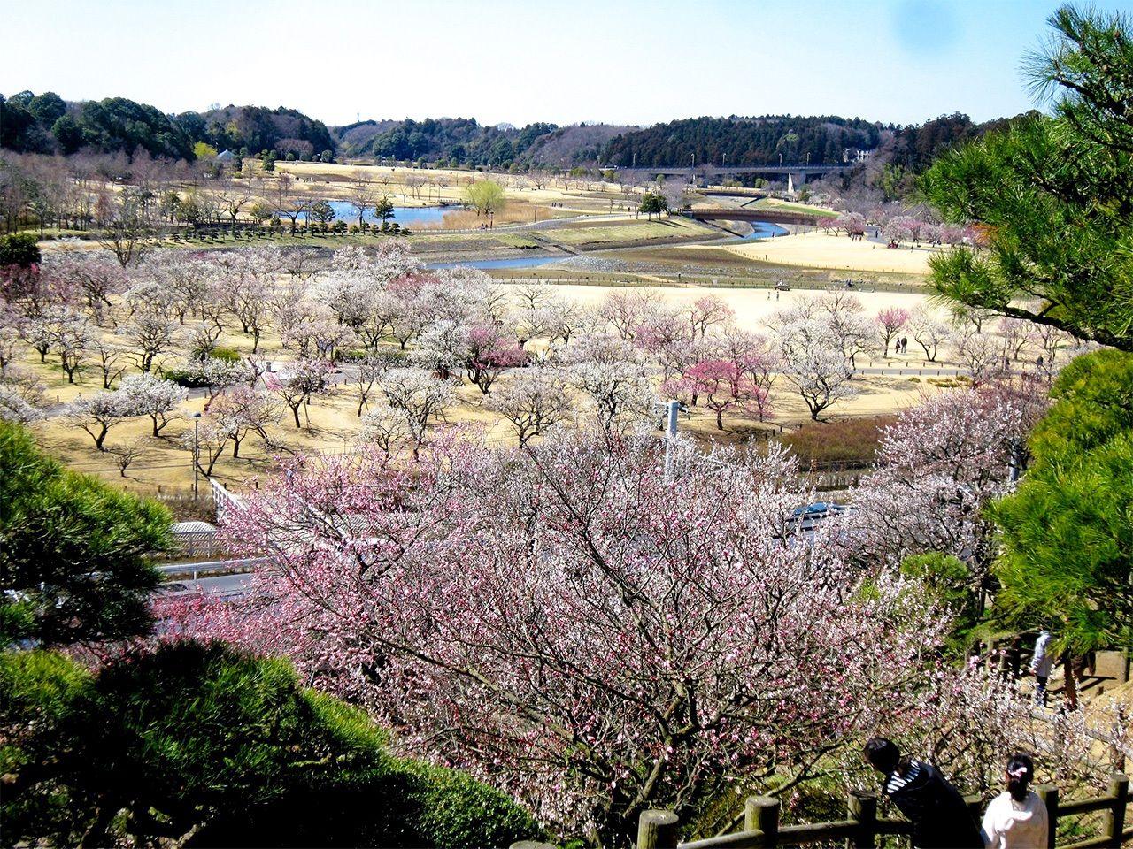 (Фотография предоставлена префектурой Ибараки)