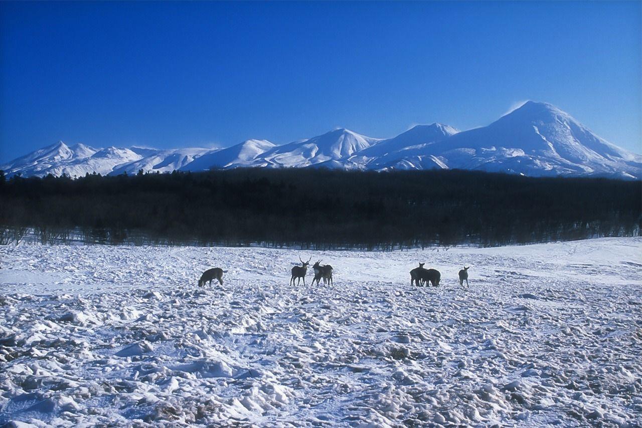 Луг Фурэпэ зимой (предоставлено природоохранным фондом «Сирэтоко»)