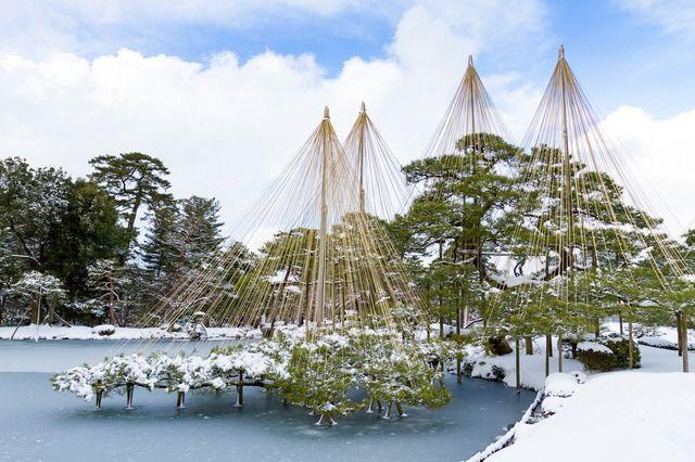 Верёвки предотвращают порчу деревьев от снегопада в парке Кэнрокуэн в Канадзаве преф. Исикава