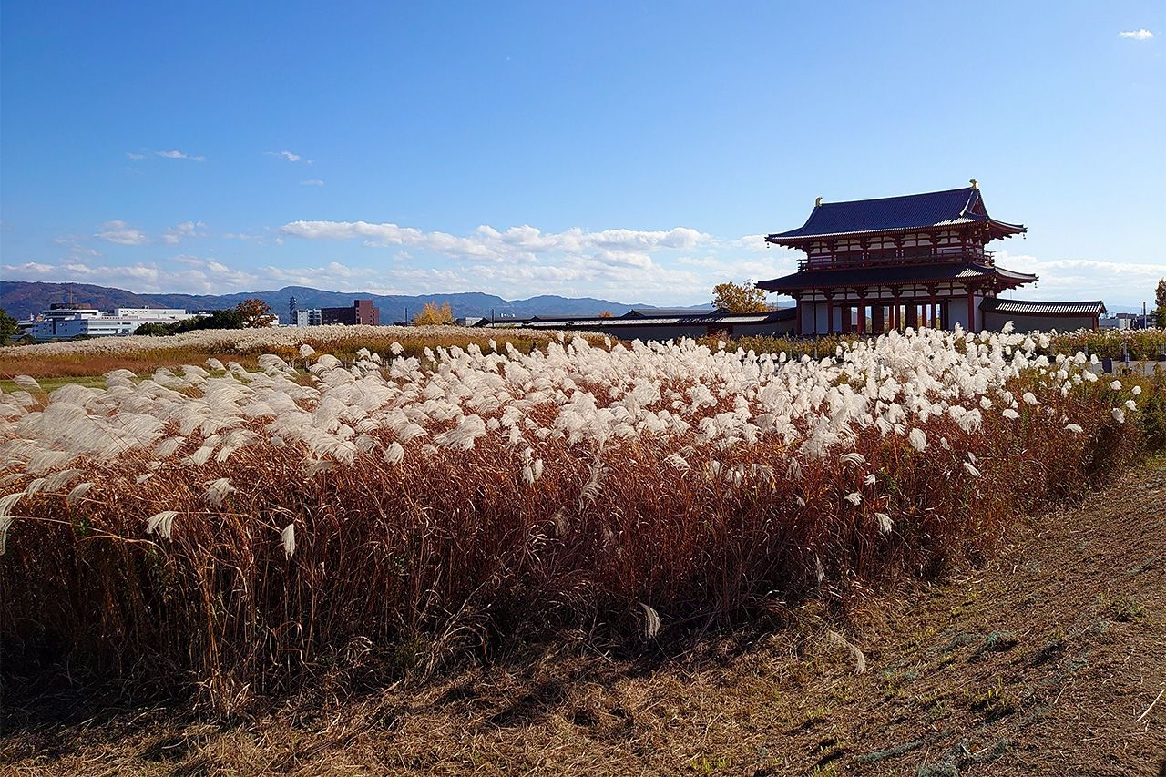 Ворота Судзакумон на месте столицы Хэйдзё-кё посреди моря травы сусуки (фото автора)