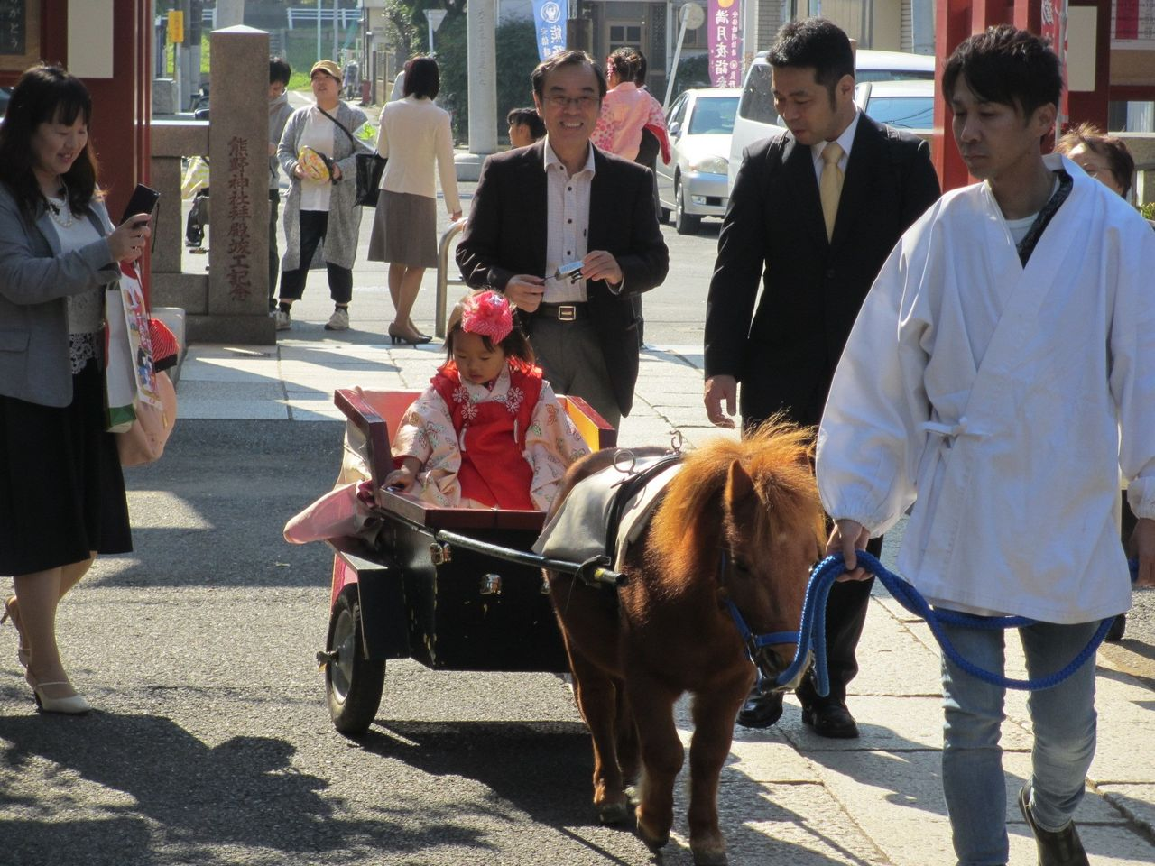 Раньше Кирара возила повозку во время паломничеств Ситигосан, но сейчас она передала эстафету молодым Тёко и Банила (предоставлено святилищем Кумано)