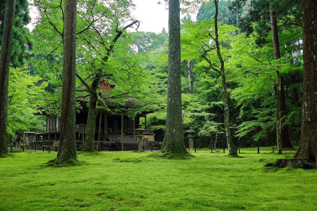 Сад с моховым ковром в буддийском храме Сандзэнъин в префектуре Киото. Всю поверхность сада устилают мхи (фотография автора)
