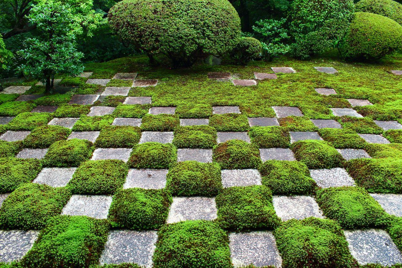 Моховой сад узорного типа в буддийском храме Тофукудзи в префектуре Киото. Мох и каменные плиты создают выразительный клетчатый узор (фотография автора)