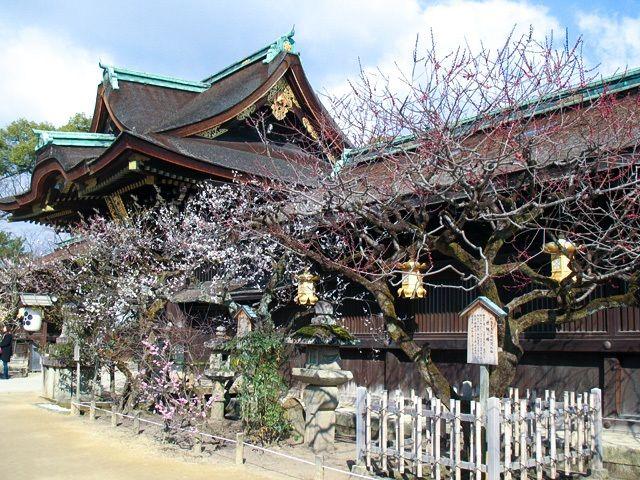 Сливы святилища Китано-Тэммангу в Киото. До периода Хэйан именно слива была вестником прихода весны (фото автора)