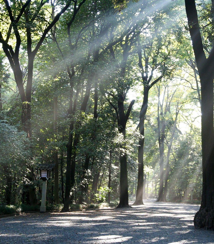 Внутренний сад святилища Мэйдзи (фотография предоставлена святилищем Мэйдзи)