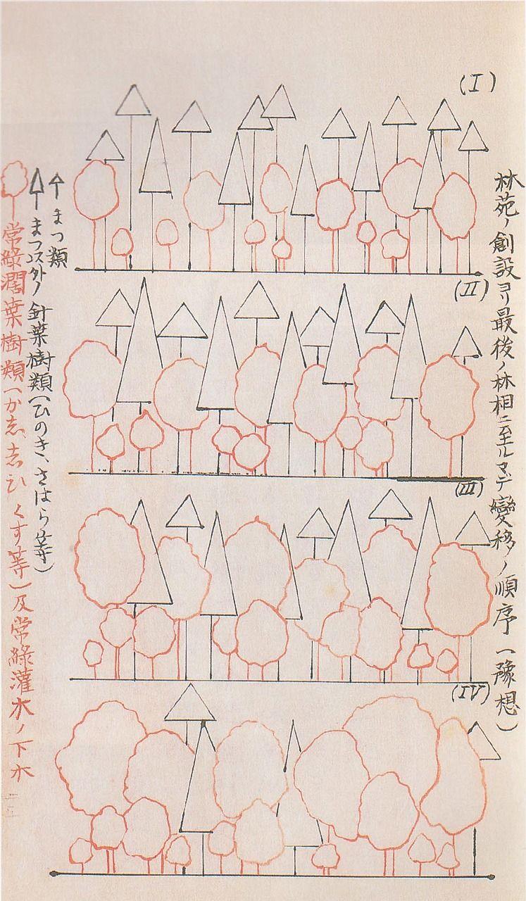 Созданная Хонго Таканори «Диаграмма прогноза последовательности переходов от посадки леса к конечному лесу»; показан лес сразу после посадки, 50, 100 и 150 лет спустя (фотография предоставлена святилищем Мэйдзи-дзингу)