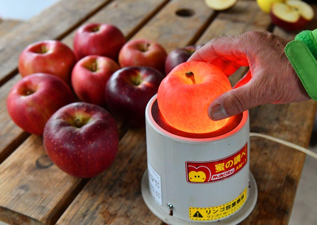 Прибор для измерения содержания сахара в яблоках
