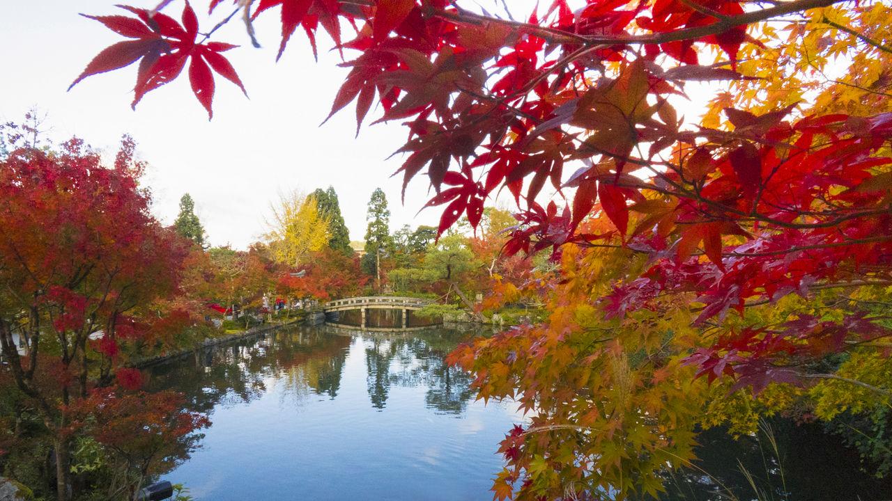 Окруженный яркой листвой пруд, где плавают разноцветные карпы, является одной из главных достопримечательностей Эйкандо, изначально известного как Дзэнриндзи. Особенно красивы виды пруда и пагоды Тахото осенью