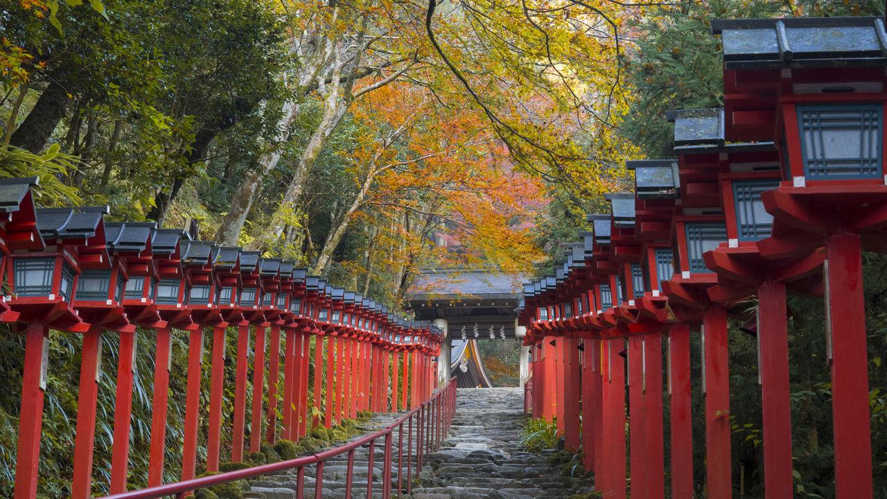 Дорога к главной святыне украшена фонарями Касуга, а осенью её обрамляют красочные деревья