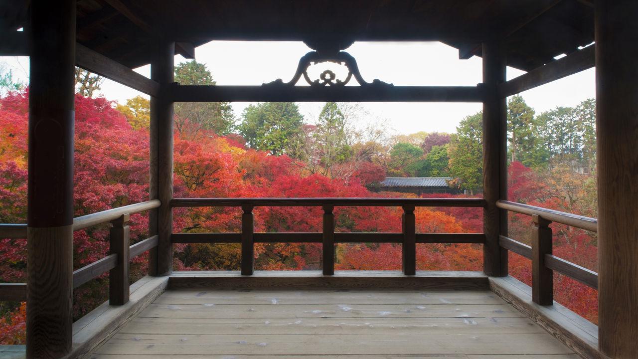 Осенняя листва у моста Гаункё со смотровой площадки Цутэнкё, другого крытого моста на территории храма