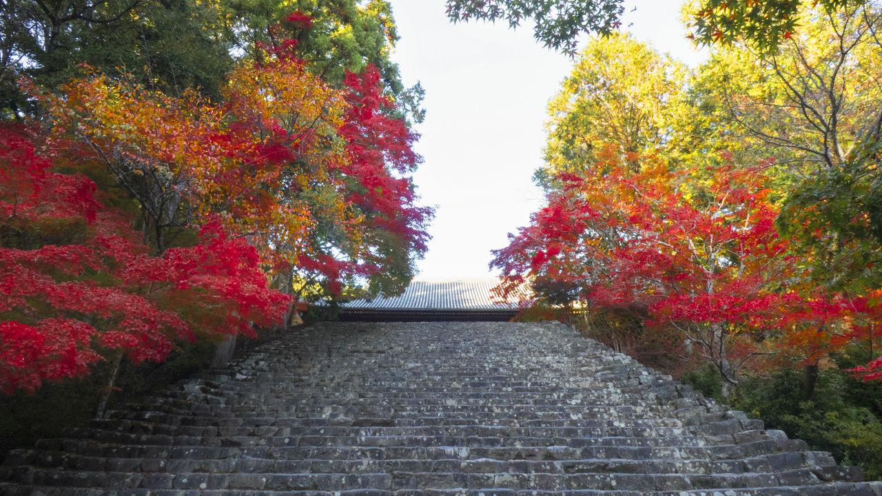 Осенняя листва и цветы у каменной лестницы, ведущей в Золотой павильон (Кондо) этого храма