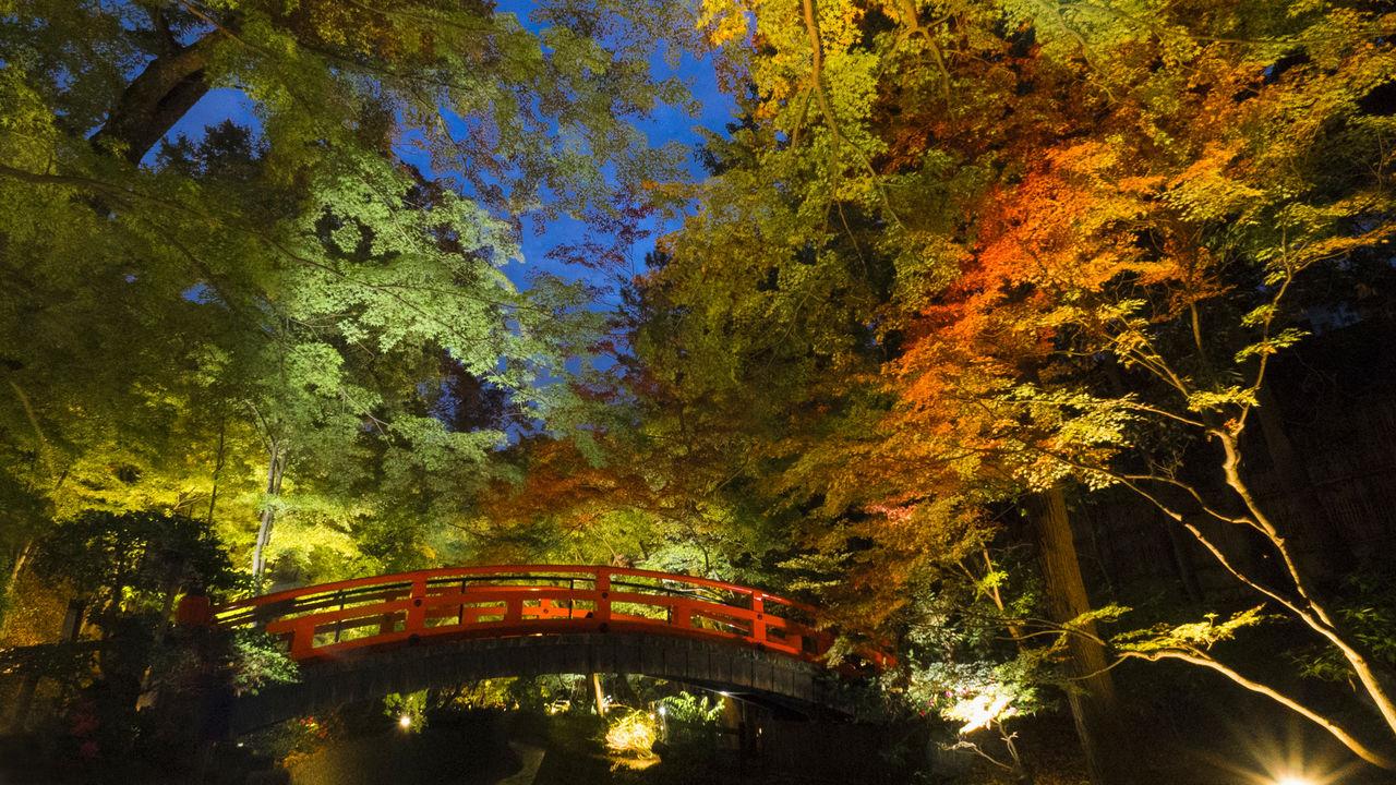 Осенняя листва, окружающая Угуисукё (Соловьиный мост) над рекой Камия